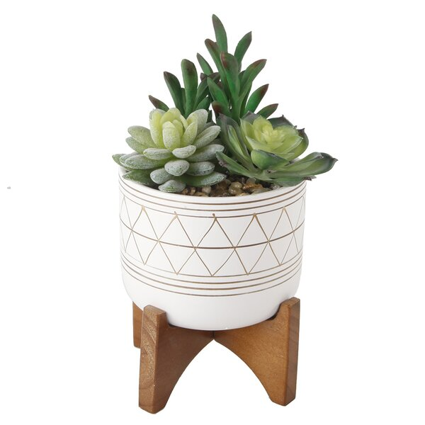 Haakenson Hand Paint Ceramic Footed Pot Planter by Bungalow Rose