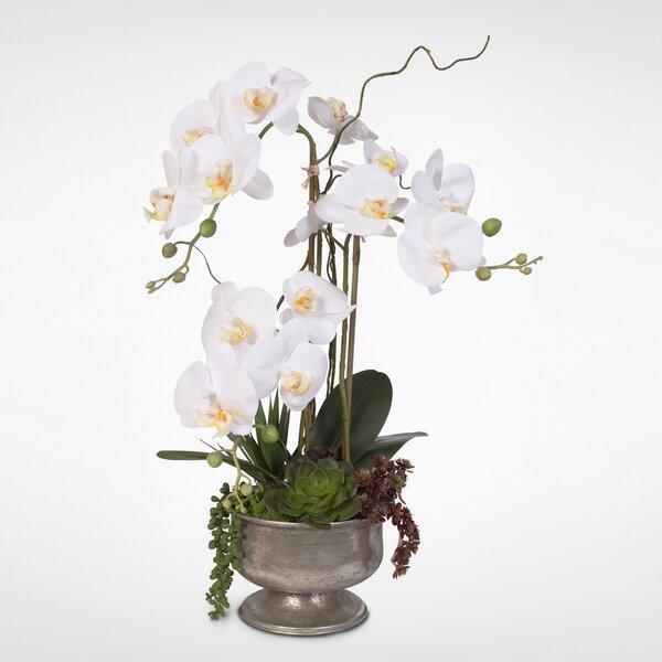 Desktop Orchids Centerpiece in Urn by Bloomsbury Market