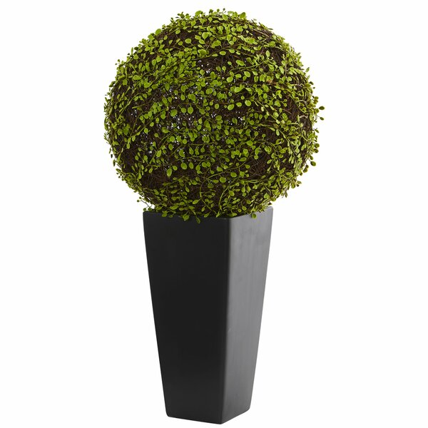Mohlenbechia Ball Moss Topiary in Tower Vase by Brayden Studio