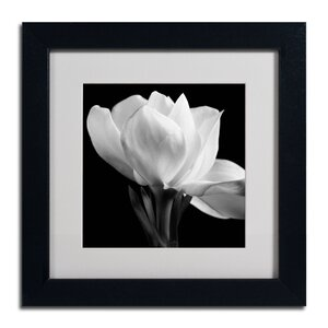 Gardenia by Michael Harrison Framed Photographic Print by Trademark Fine Art