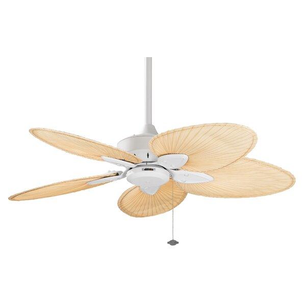 44 Windpointe 5 Blade Ceiling Fan by Fanimation