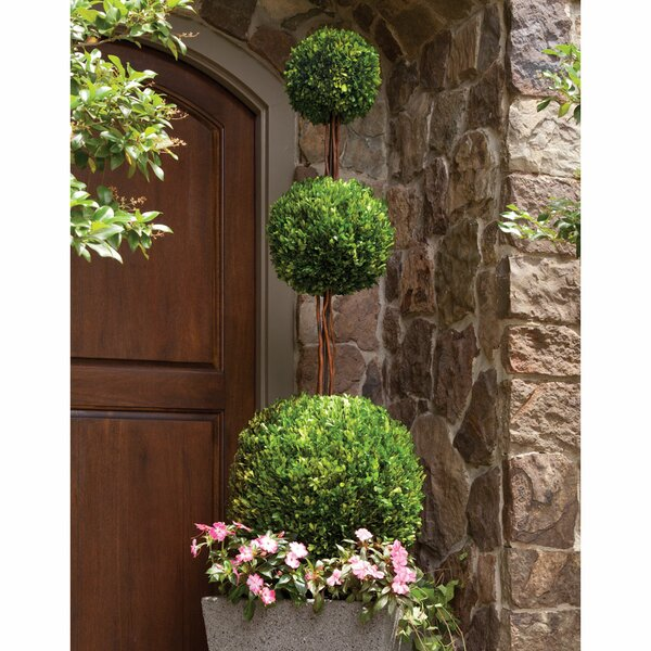Boxwood Topiary in Pot by One Allium Way