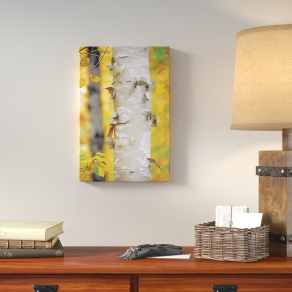 Autumn Birches by Leda Robertson Photographic Print on Wrapped Canvas by Loon Peak