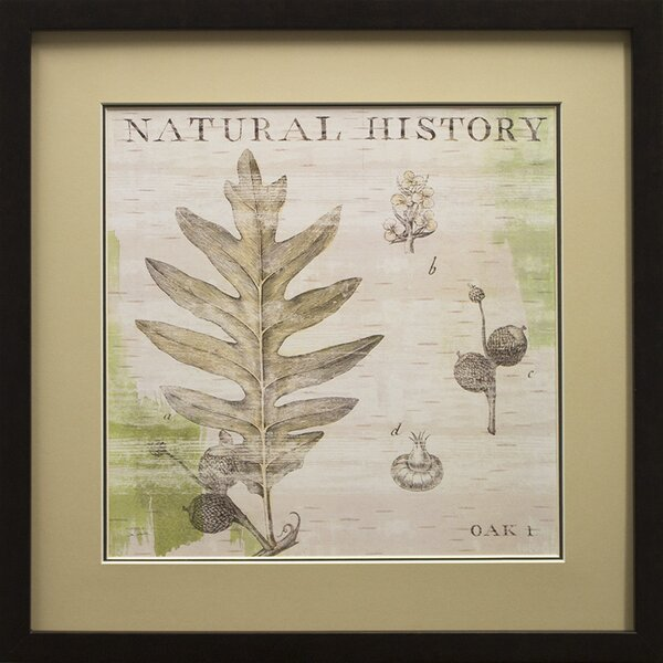 Natural History Oak I Framed Graphic Art Print in Black by Star Creations