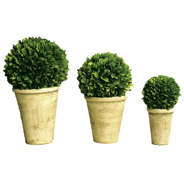 3 Piece Boxwood Ball Set in Pots by Mills Floral