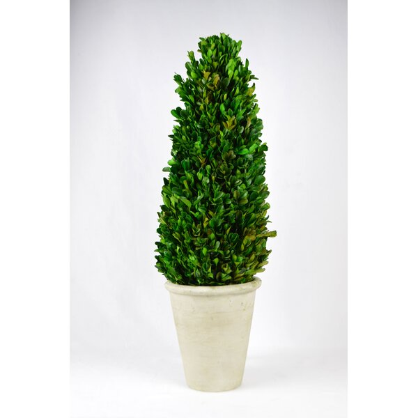Floor Boxwood Tower Topiary in Pot by Fleur De Lis Living