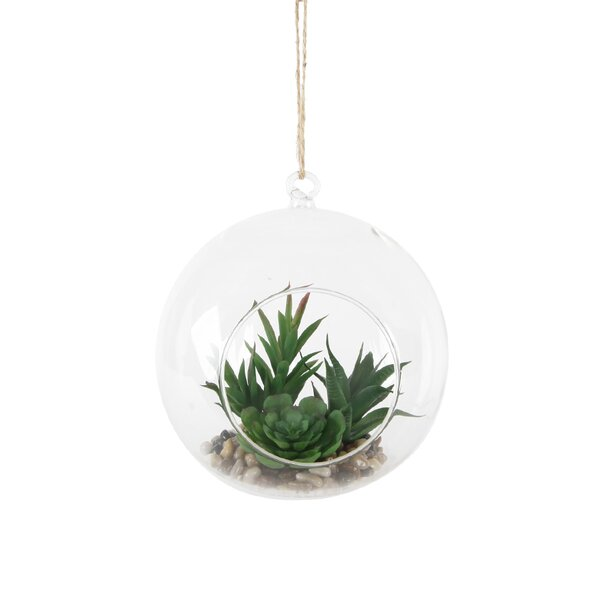 Hanging Succulent Plant in Glass Globe Terrarium by Bungalow Rose