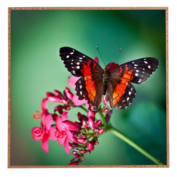 Butterfly Framed Graphic Art by East Urban Home