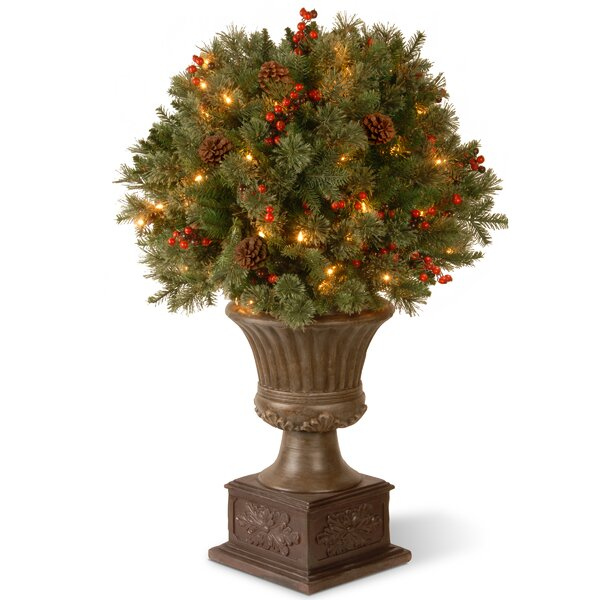 Gladstone Porch Bush Foliage Topiary in Urn by National Tree Co.