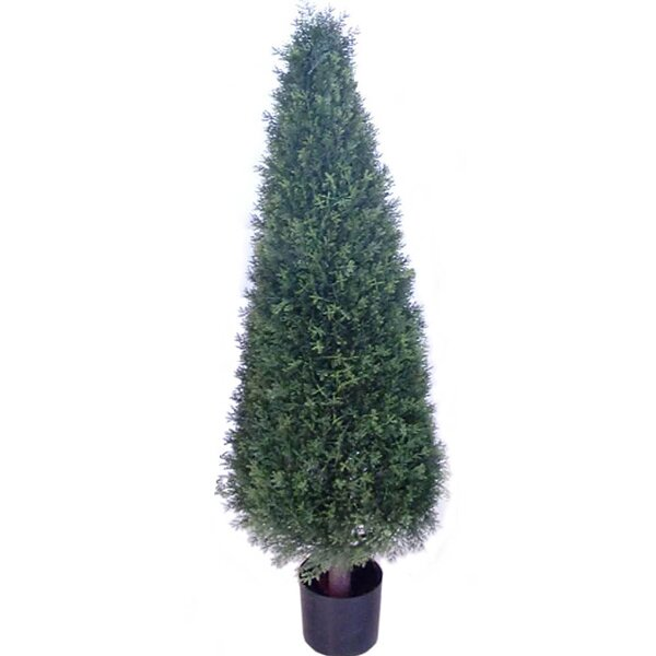 Cone Cedar Topiary in Pot by Larksilk