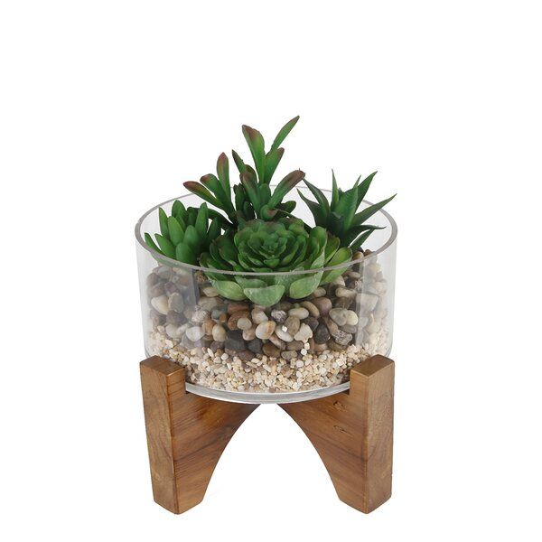 Desktop Succulent Plant and River Rocks in Pot by