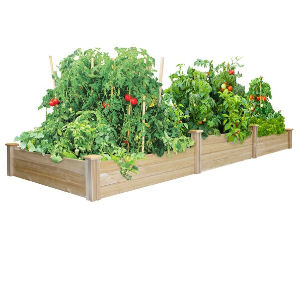 Hersche 12 ft x 4 ft Cedar Raised Garden by Freeport Park