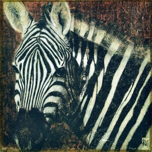 Zebra Graphic Art on Canvas by Empire Art Direct