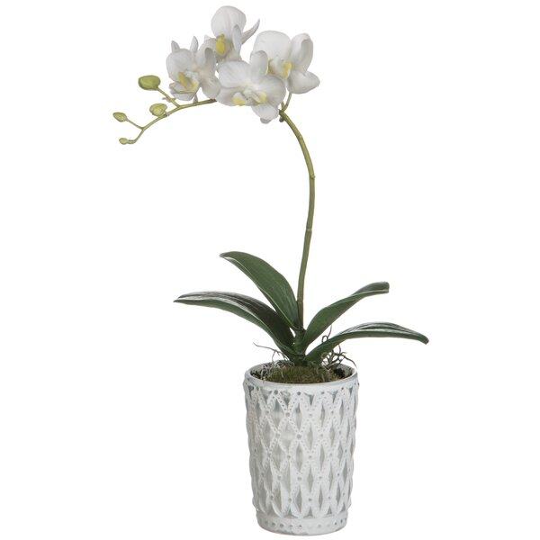 White Phalaenopsis Orchid Floral Arrangement in Pot by Rosdorf Park