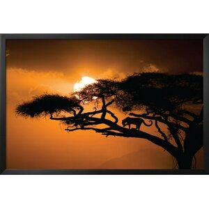 'African Sky II (Leopard in Tree) Poster' by Jim Zuckerman Framed Photographic Print by Buy Art For Less