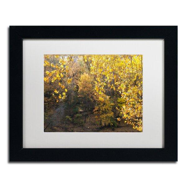 Golden Autumn 2 by Kurt Shaffer Framed Photographic Print by Trademark Fine Art