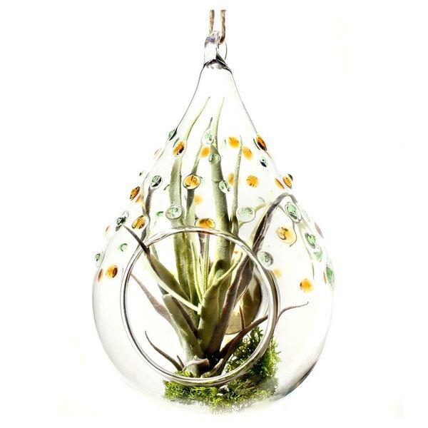 Lombard Glass Terrarium by Mercury Row