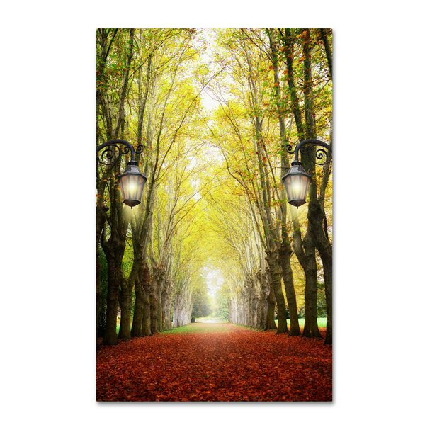 Plane Tree Alley by Philippe Sainte-Laudy Photographic Print on Wrapped Canvas by Trademark Fine Art