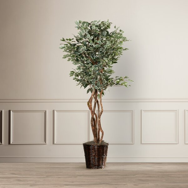 Artificial Potted Natural Variegated Ficus Tree in Basket by Alcott Hill