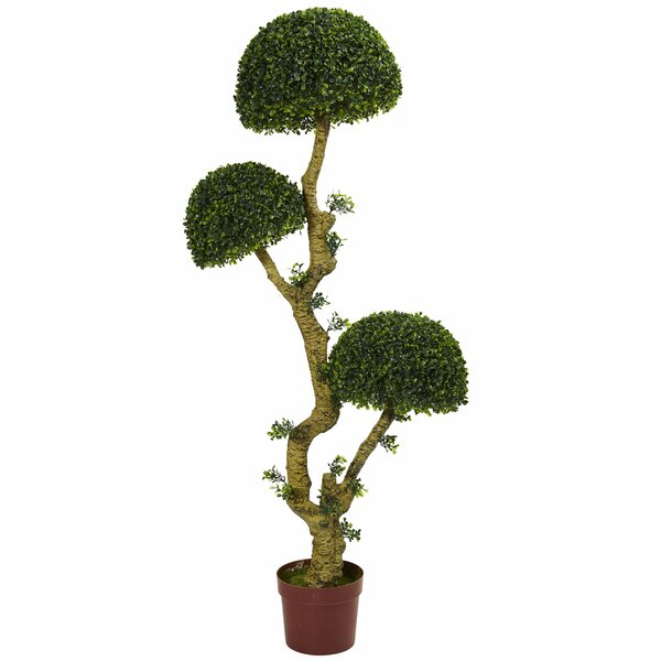 5 Triple Boxwood Topiary by Bloomsbury Market