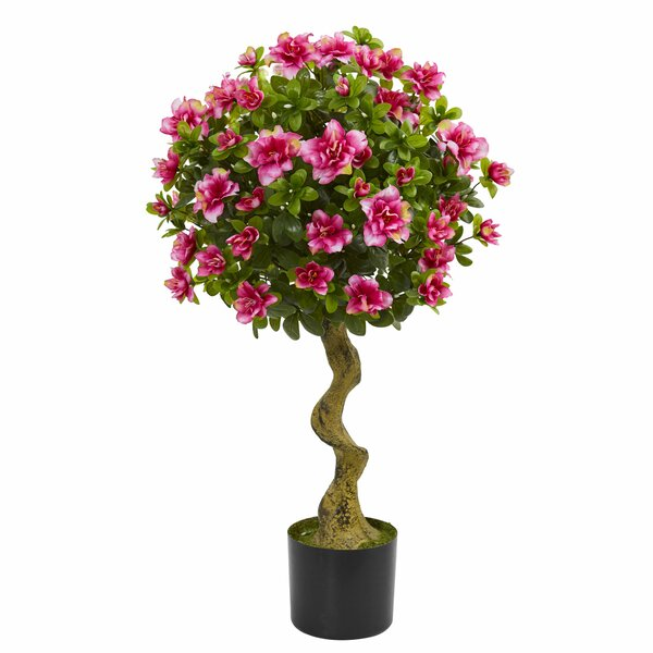 Azalea Ficus Topiary by Darby Home Co