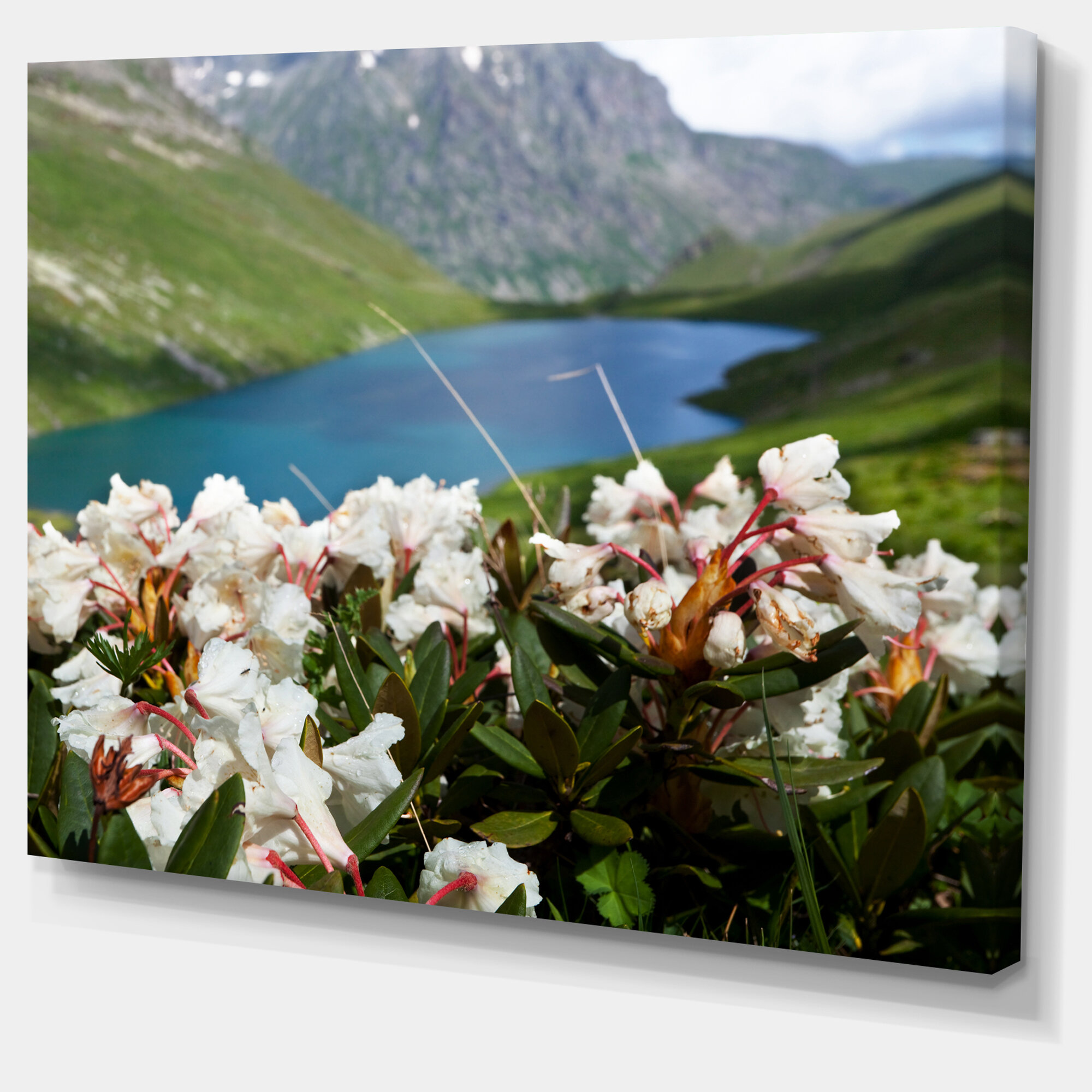 Designart Mountains Lake With White Flowers Photographic Print On Wrapped Canvas Wayfair