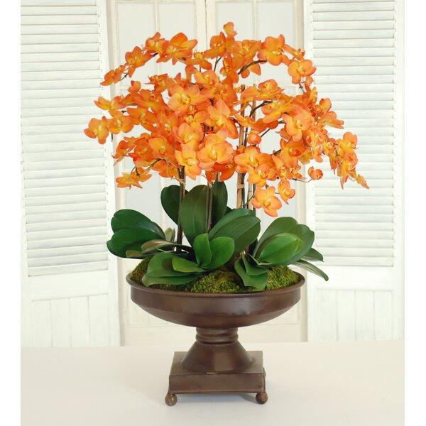 Phalaenopsis Orchids Centerpiece in Metal Urn by Jane Seymour Botanicals