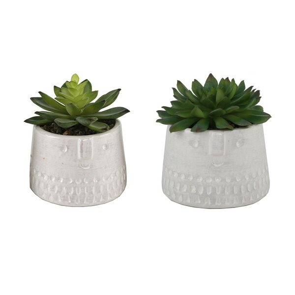 2 Piece Succulent Desktop Plant in Pot Set by Eber
