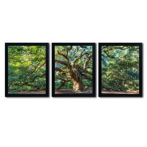Angel Oak Charleston by Pierre Leclerc 3 Piece Framed Photographic Print Set by Trademark Fine Art