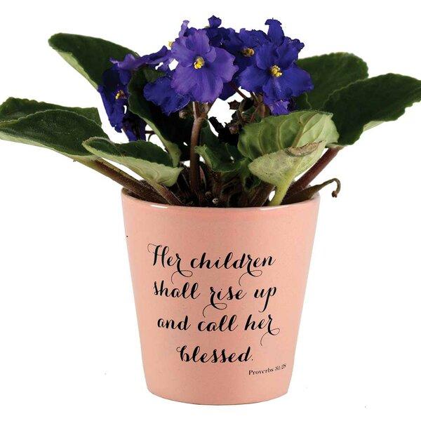Schons Terracotta Pot Planter by Winston Porter