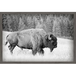'Buffalo Grazing' Framed Photographic Print by Marmont Hill