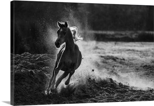 Take Off by Mohammed Alnaser Photographic Print on Canvas by Canvas On Demand