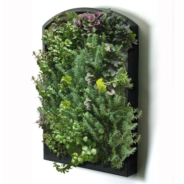 Living Plastic Wall Planter by Algreen