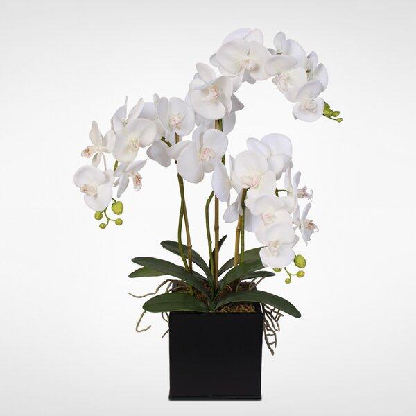 Phalaenopsis Silk Orchids Floral Arrangement in Planter by Latitude Run