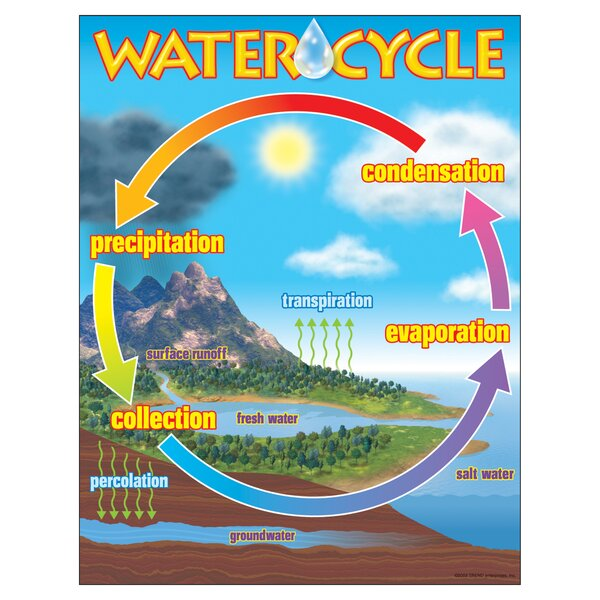 The Water Cycle Chart by Trend Enterprises