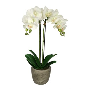 Orchids youll love wayfair quickview mightylinksfo