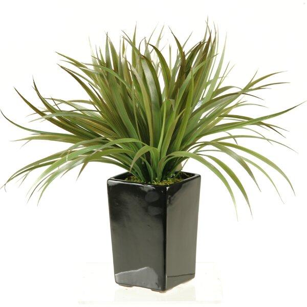 Square Ceramic Grass in Planter by D & W Silks