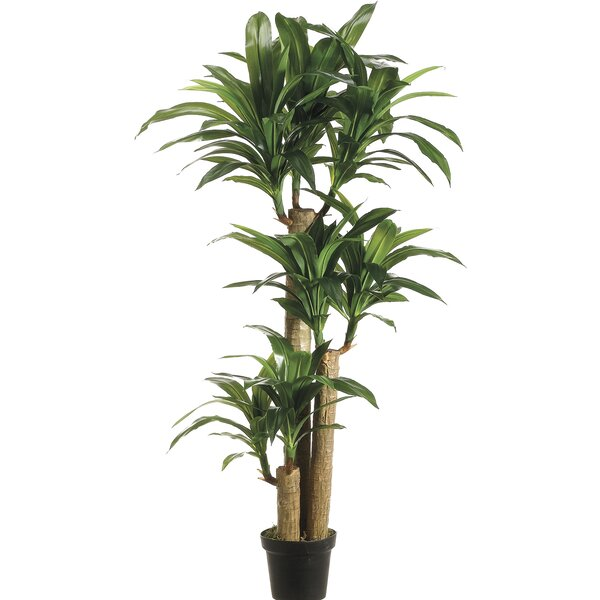 Tropical Dracaena Tree in Pot by Bay Isle Home