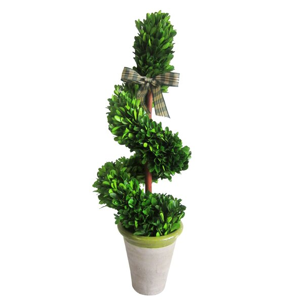 Preserved Boxwood Rotate Topiary in Pot by Jeco Inc.