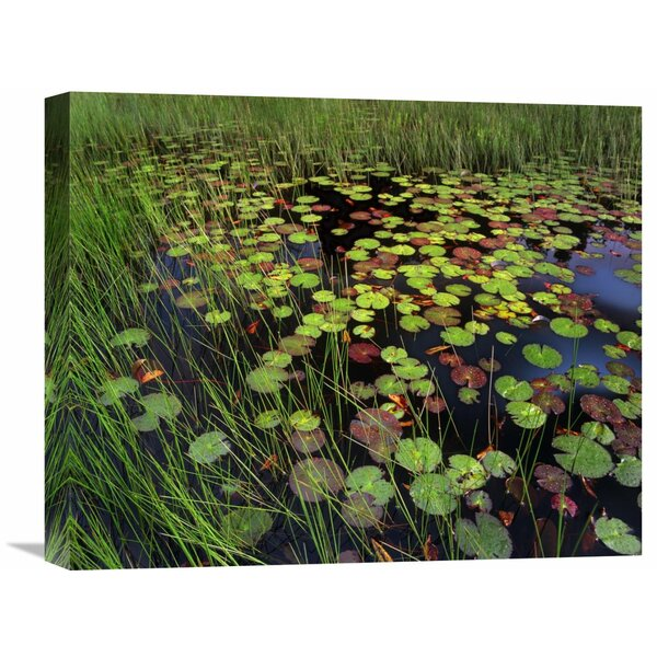 Nature Photographs Pond with Lily Pads And Grasses, Cape Cod, Massachusetts by Tim Fitzharris Photographic Print on Wrapped Canvas by Global Gallery
