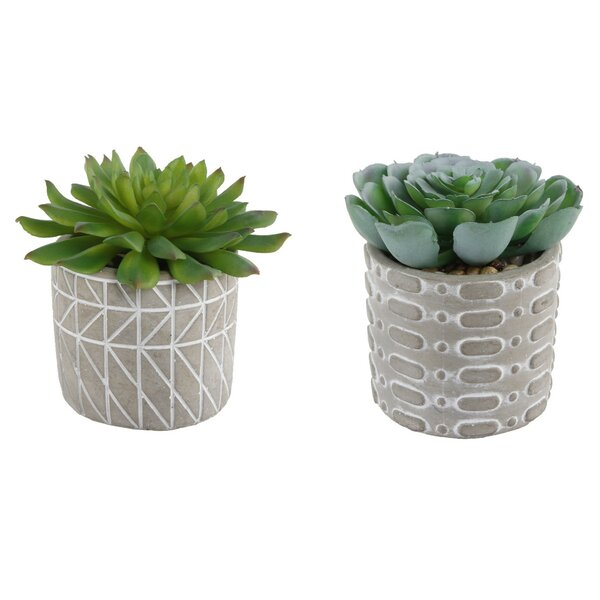 2 Piece Pattern Cement Desktop Succulent Plant in Pot Set by Bungalow Rose