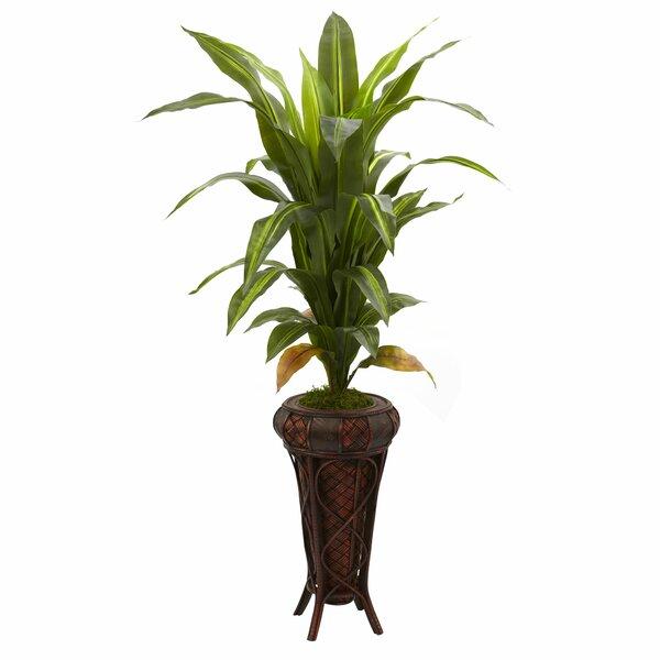 Dracaena Floor Plant in Decorative Vase by Bay Isle Home