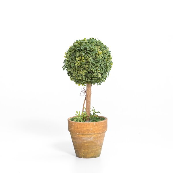 Hettick Mini Single Desktop Boxwood Topiary in Pot (Set of 12) by Charlton Home