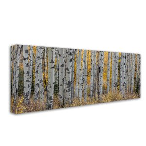 Aspen Trees by Pierre Leclerc Photographic Print on Wrapped Canvas by Trademark Fine Art