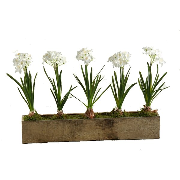 Paperwhites Flower in Planter by Laurel Foundry Modern Farmhouse