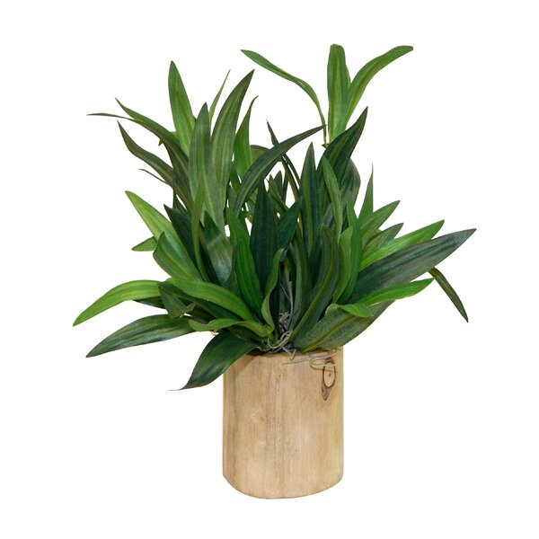 Spider Plant in Decorative Vase by Wrought Studio
