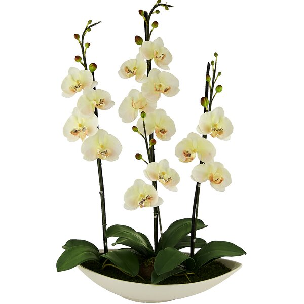 Phalaenopsis Orchid Floral Arrangement in Pot by Red Vanilla