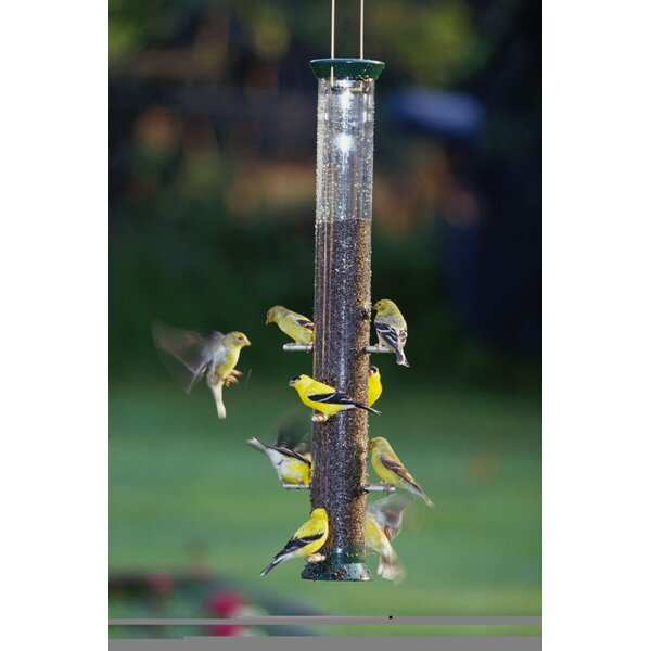 New Generation Seed Tube Bird Feeder by Droll Yankees