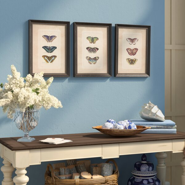 Illustrated Butterfly Framed Prints (Set of 3) by Birch Lane™