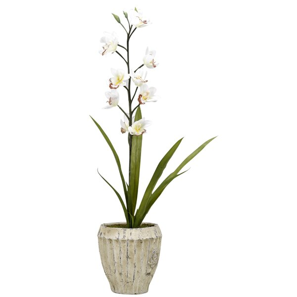 Cymbidium Orchids Floral Arrangement in Planter by Ophelia & Co.